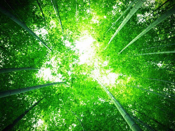 大阪 自然