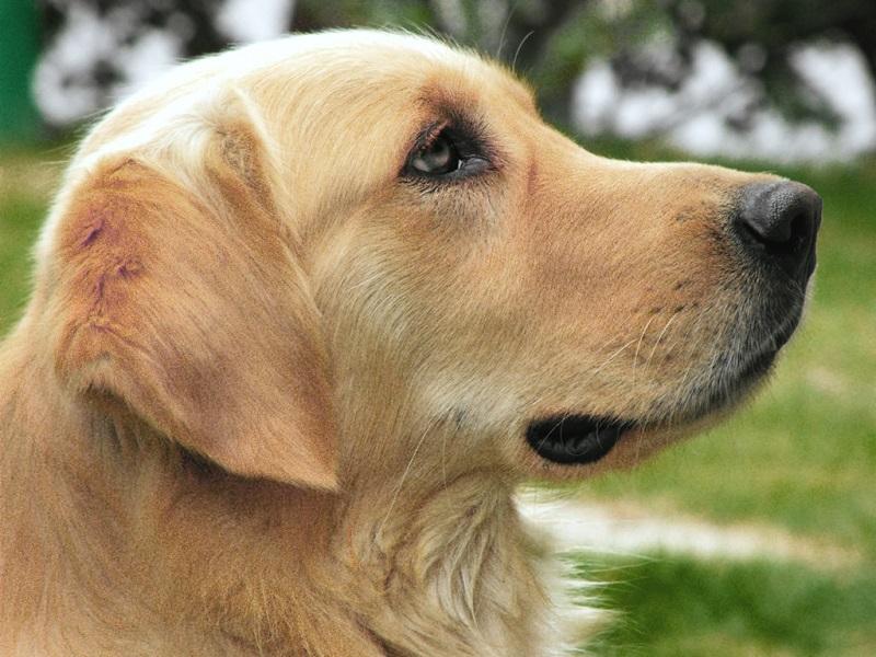 かわいい 犬