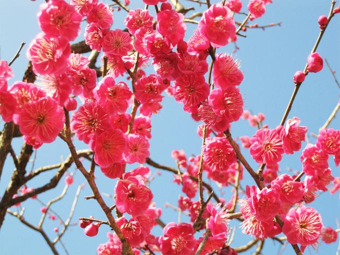 花見 季節