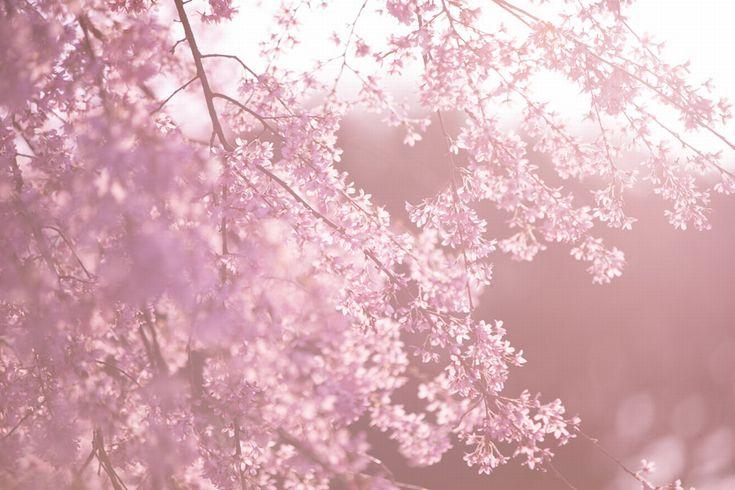 ピンク 春