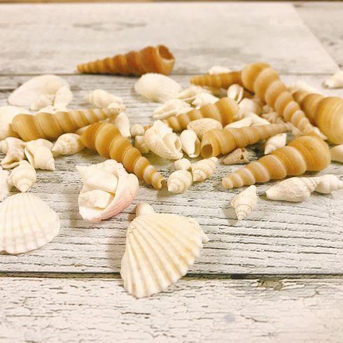 材料 貝殻